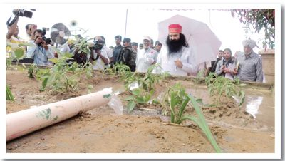 Online Gurukul jattu engineer , baba ram rahim innovation